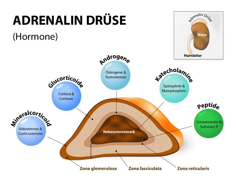 Hormondrüse